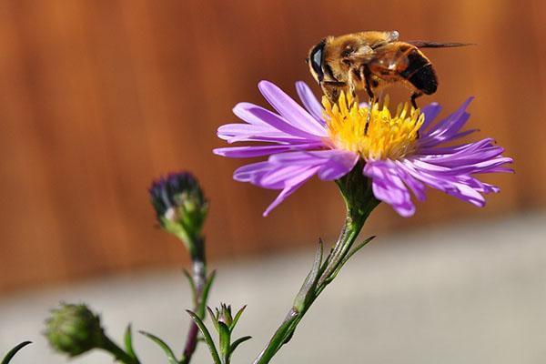 работает пчела
