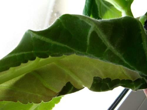 скрученный лист