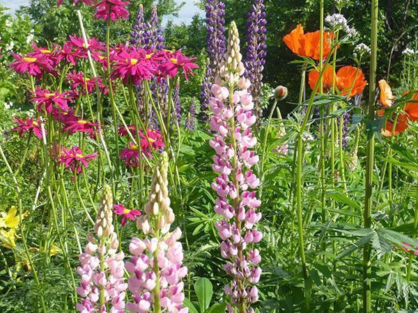 Синие цветы – фото. Растения с синими цветками, сочетания с синим цветом в саду