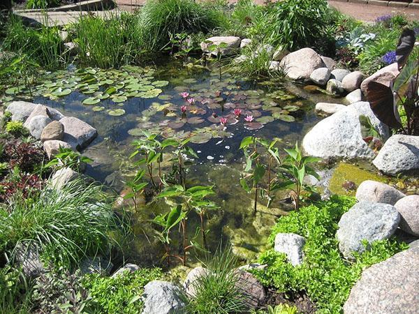пруд в пейзажном стиле