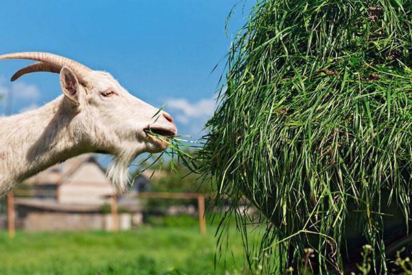 заготовка сена козам