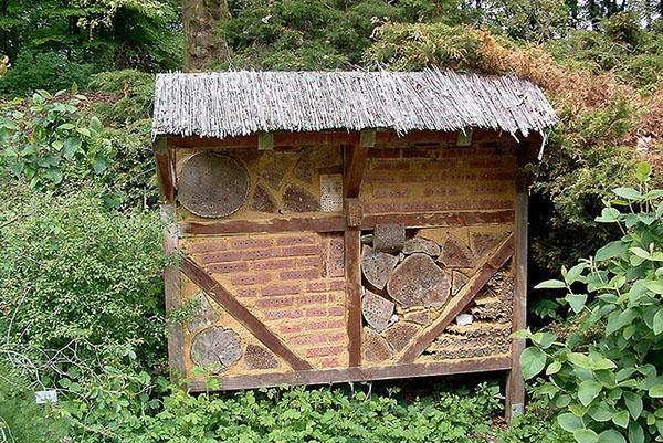 домик для пчел в лесу