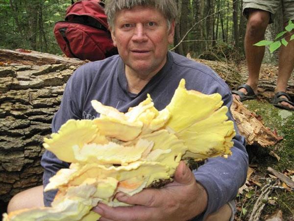 изобилие грибов