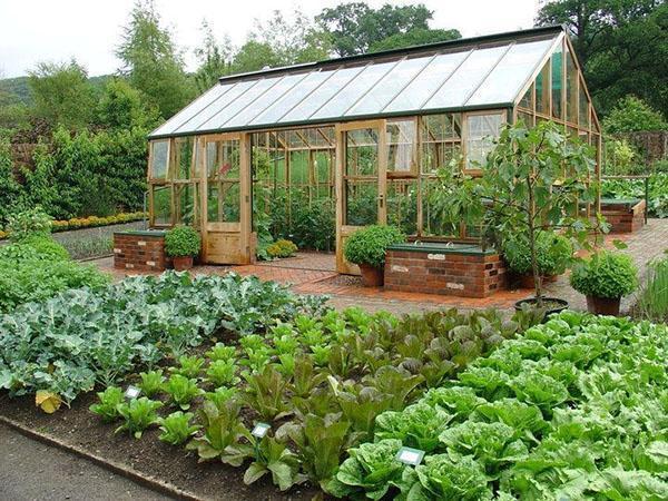 комфортные безопасные условия для растений