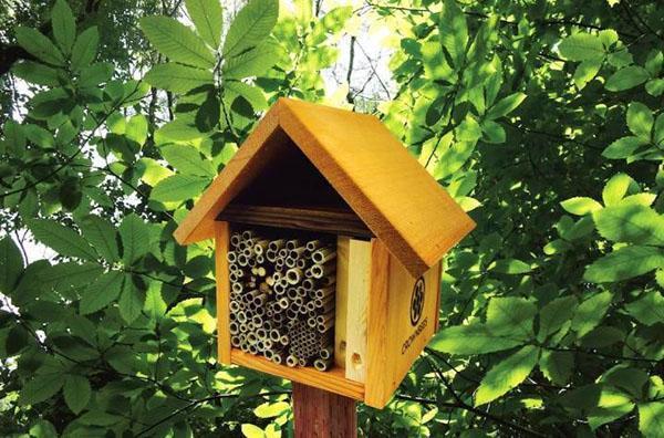 пчелиный отель
