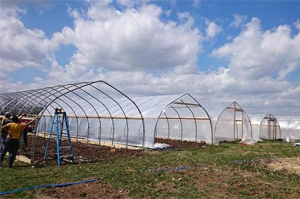 подготовка теплиц к посадке овощей