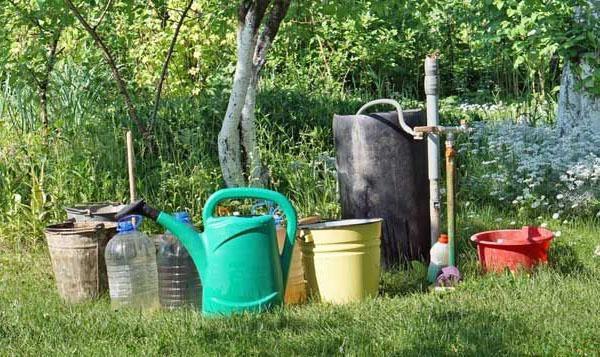 полив и удобрение деревьев