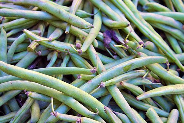 сбор урожая фасоли
