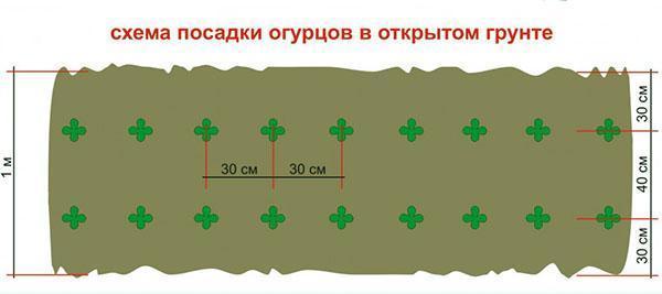 схема посадки огурцов на грядку