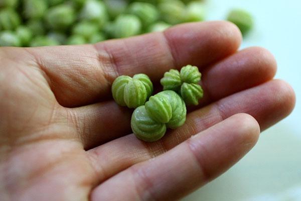 зеленые семена настурции для приготовления каперсов