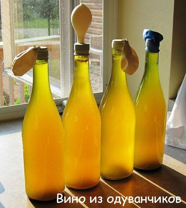брожение вина из одуванчиков