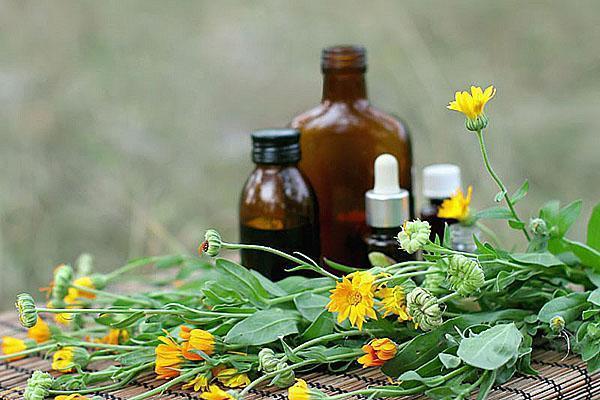 для приготовления настойки используют цветы календулы