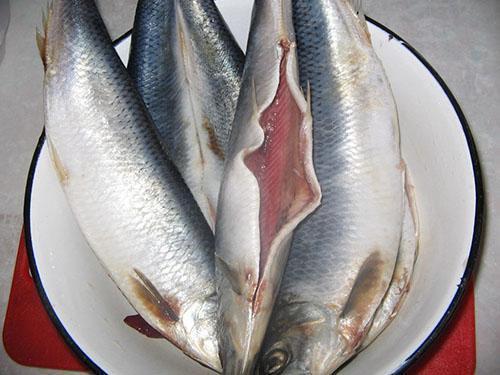 подготавливаем рыбу к засолке
