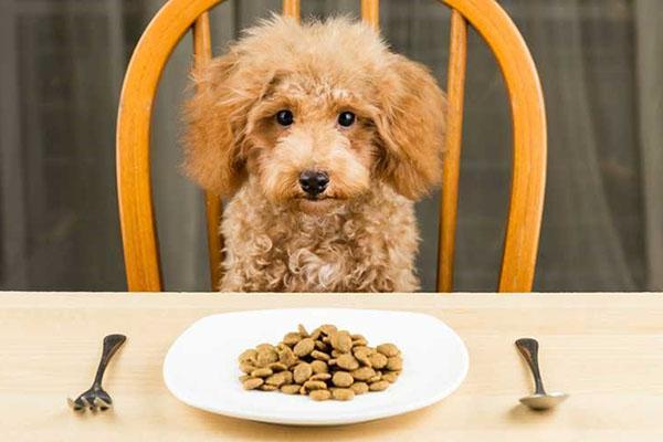 питательный корм для собаки