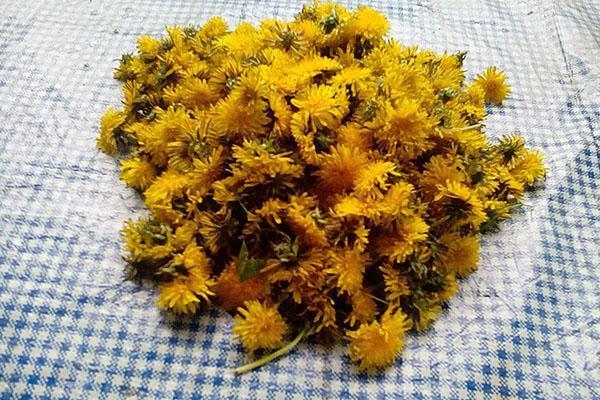 цветы одуванчиков для меда