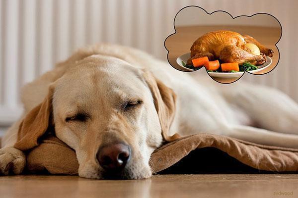 потребности собаки в питательном корме