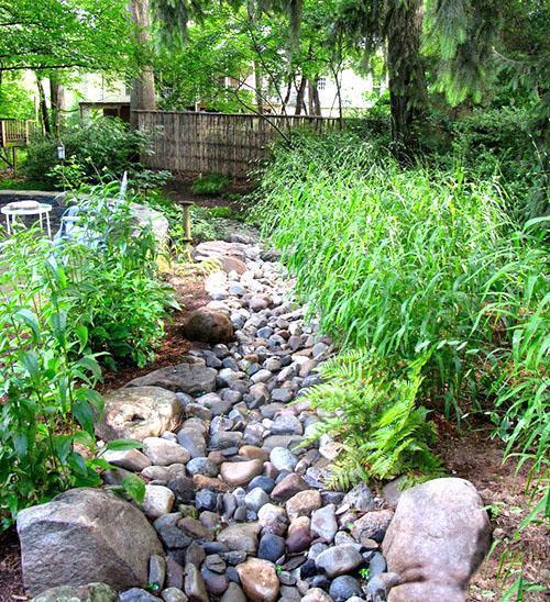 растения вдоль ручья