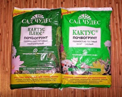 сад чудес для кактусов
