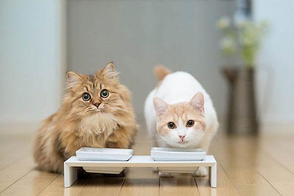 выбираем корм для котов