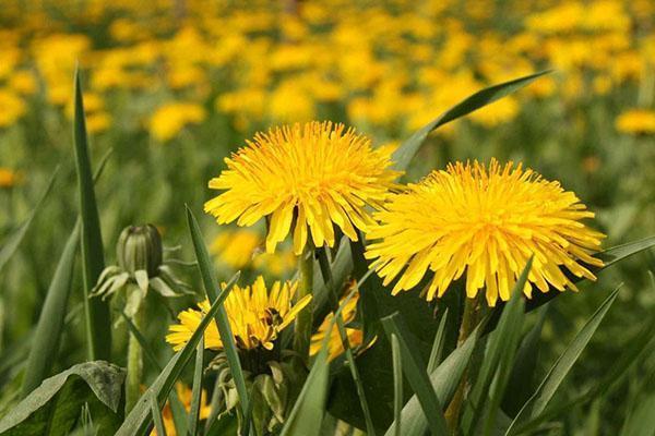 яркий солнечный цветок