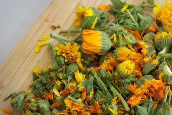 заготовка цветов календулы