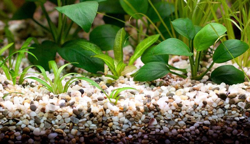 питательная основа для растений