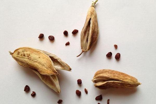 семена ириса для размножения