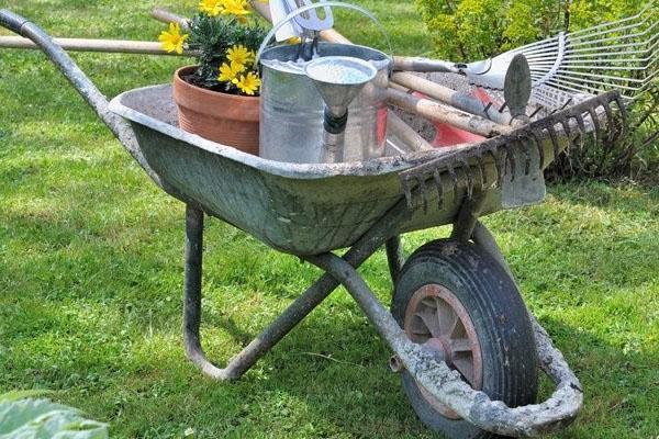 обрезка кустарников и сбор мусора