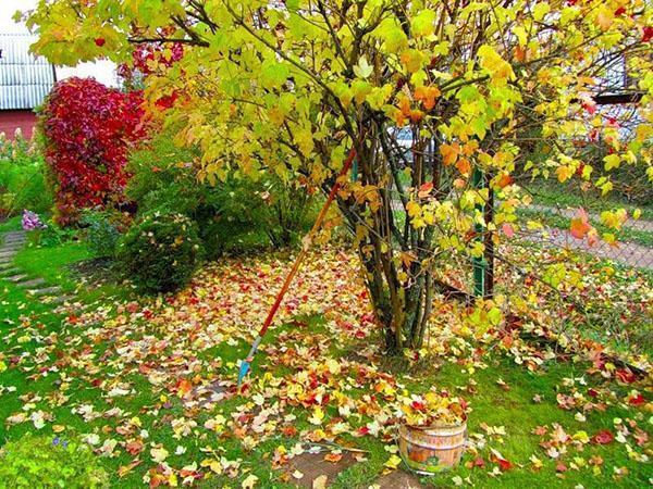 октябрьские заботы в саду