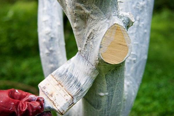 осенняя побелка деревьев