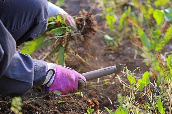 убираем сорняки