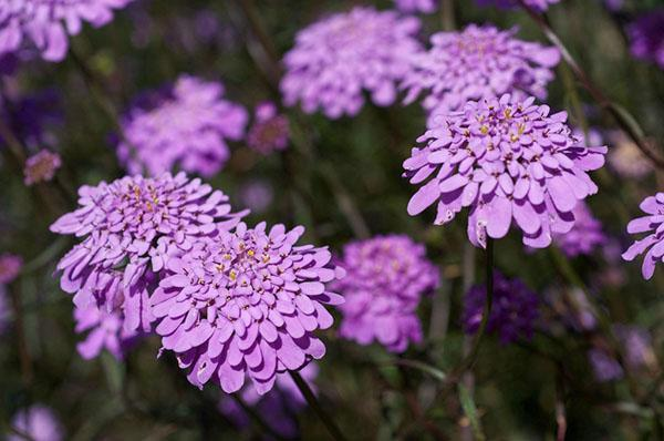 цветение при правильном уходе