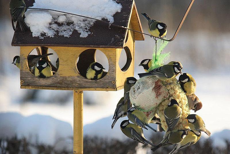 звезды картинки кормушек зимних кормушек для птиц грузовых вагонов выполняют