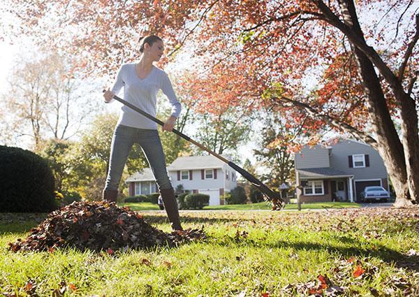 уборка листвы на даче