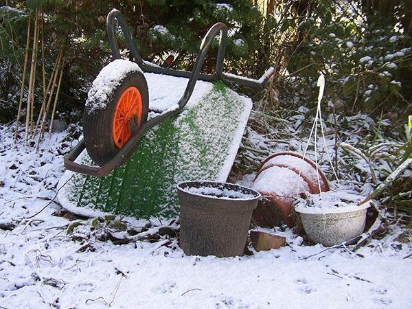 первый ноябрьский снег