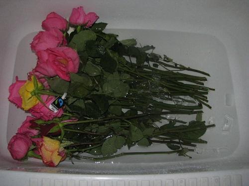 отпаивание роз