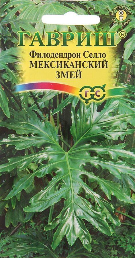 семена филодендрона