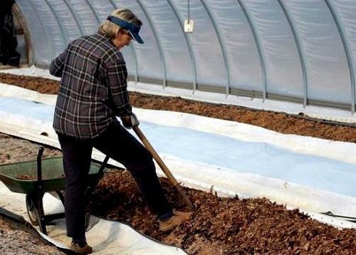 Удобрение почвы осенью в теплице