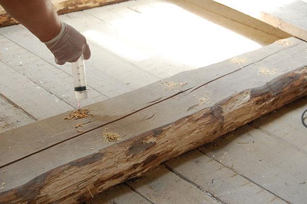 борьба с жуком короедом дома