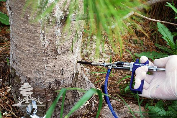 борьба с короедом в саду