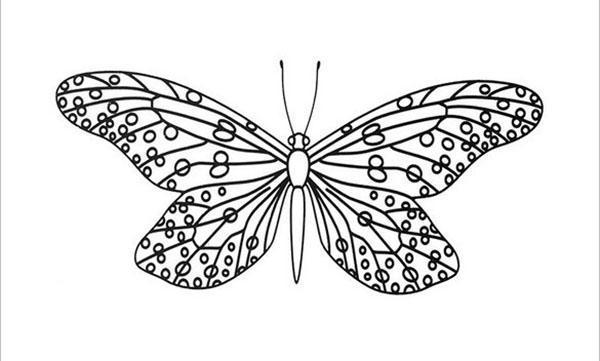 бабочка с большим размахом крыльев