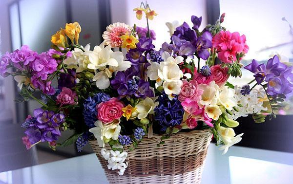 композиция из домашних цветов