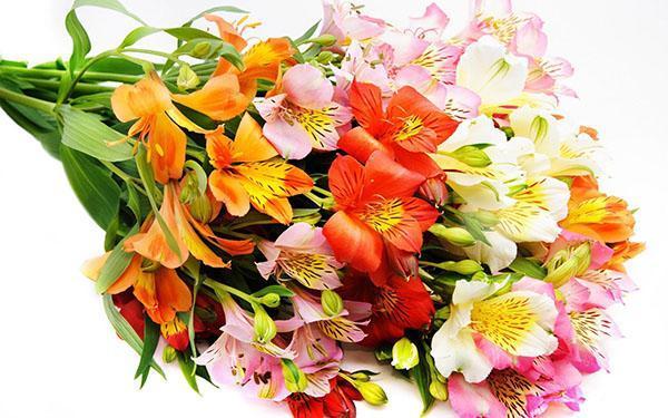 Каталог букетных цветов с фото и названиями #12