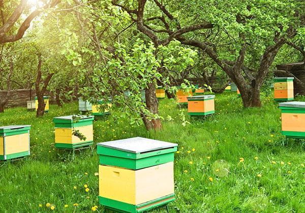 инта-вир токсичен для пчел