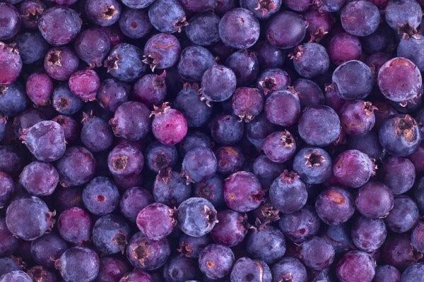 плоды ирги