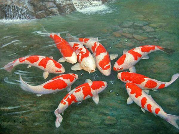 рыба в чистом пруду