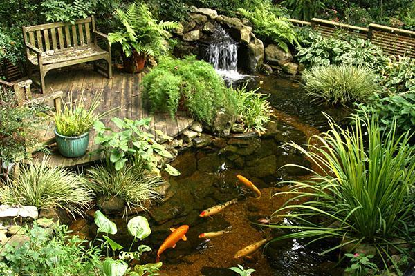 ухоженный пруд с рыбами на даче