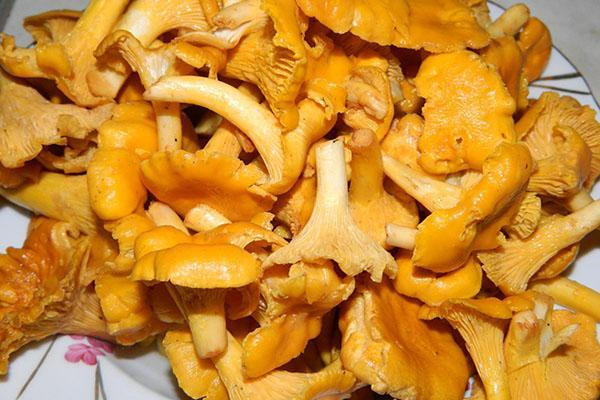 собранные грибы необходимо промыть