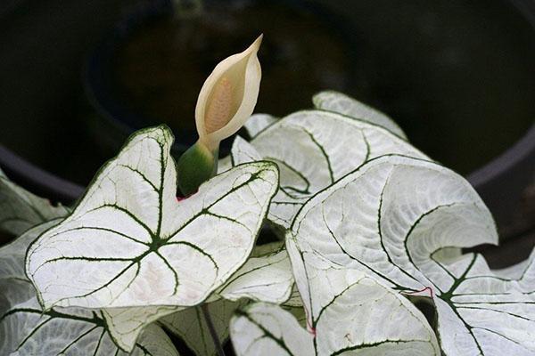 экзотическое цветение