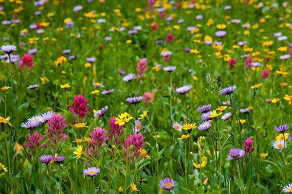 Многолетние цветы для дачи: названия, виды, фото (70 штук) | 400x600